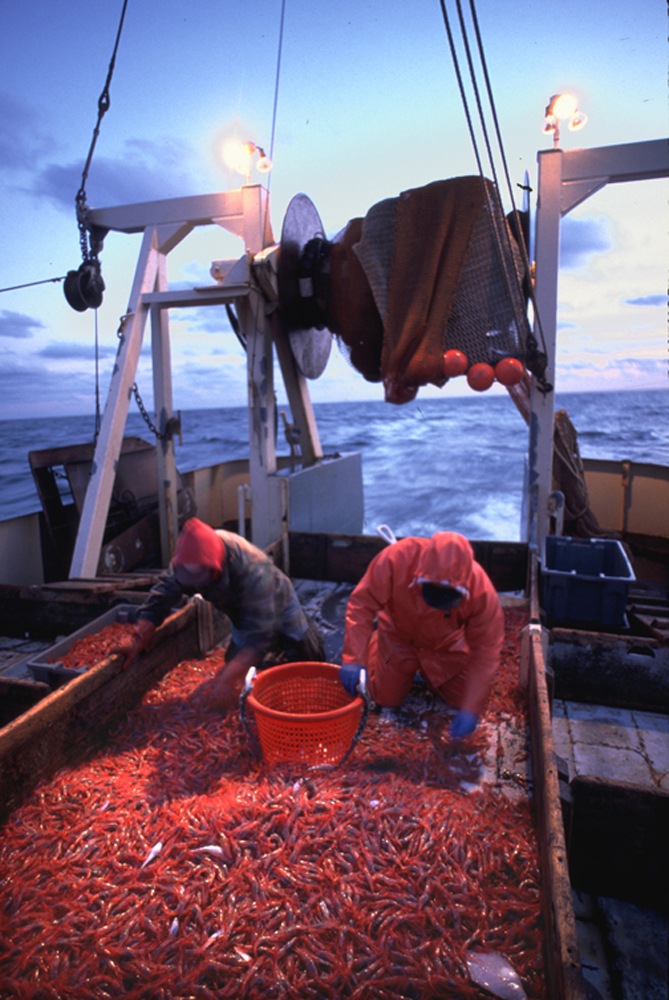 Aboard a shrimp boat for a story on shrimping Down East Magazine